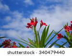 Red Nerium Oleander With Blue...
