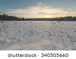 Winter Snow Covered Wood. A...