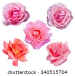 Stock photo roses flowers it is isolated on a white background 340515704