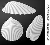 sea shells | Shutterstock .eps vector #340586720