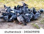 A Lot Of Pigeons Around...