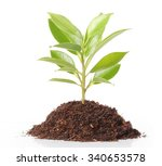 green sprout growing from | Shutterstock . vector #340653578