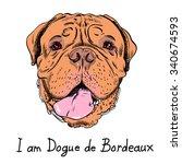Dog French Mastiff Or Dogue De...
