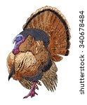 vector illustration. hand drawn ... | Shutterstock .eps vector #340678484