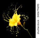 bright flower with yellow...   Shutterstock . vector #340679690