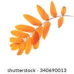 fall leaves isolated on white | Shutterstock . vector #340690013