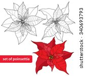 Set Of Poinsettia Flower Or...