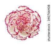 White Carnation With Dark Pink...