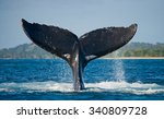 the tail of the humpback whale. ... | Shutterstock . vector #340809728