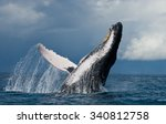 humpback whale jumps out of the ... | Shutterstock . vector #340812758