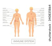immune system of a human.... | Shutterstock .eps vector #340835864