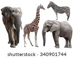 Elephant  Giraffe And  Zebra...