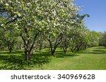 blooming apple trees in spring... | Shutterstock . vector #340969628
