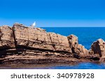 white seagull on rocky beach  | Shutterstock . vector #340978928