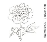 hand drawn vector with peony... | Shutterstock .eps vector #340981628