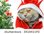 Christmas Cat Dressing Up In...