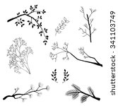branches set  hand drawn | Shutterstock .eps vector #341103749