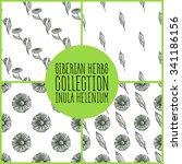 inula helenium   siberian herbs ... | Shutterstock .eps vector #341186156