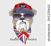 english bulldog dressed up in t ... | Shutterstock .eps vector #341220410