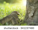 water lizard crawling on green... | Shutterstock . vector #341237480