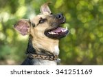 Stock photo happy dog is a happy smiling closeup of a german shepherd dog looking like he is laughing while 341251169