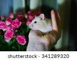 hamster pink roses | Shutterstock . vector #341289320