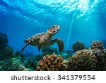 Beautiful Underwater Postcard....
