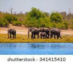 family of african elephants at... | Shutterstock . vector #341415410