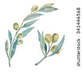 watercolor green olives. olive... | Shutterstock . vector #341446568