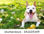 Stock photo smiling happy dog 341635349
