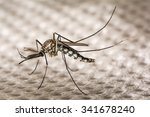 Small photo of Closeup Aedes aegypti or common house mosquito.