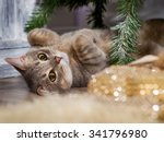 The Cat Is Under The Tree.