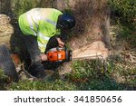Tree Felling With A Large...