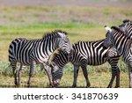 zebras in the ngorongoro crater ... | Shutterstock . vector #341870639
