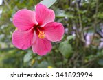 Pink Hibiscus Flowers Select...