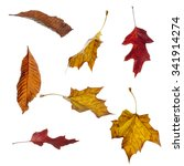 Various Autumn Leaves In...