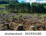 pine tree forestry exploitation ... | Shutterstock . vector #341954180