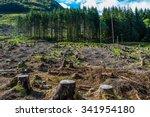 Pine Tree Forestry Exploitatio...
