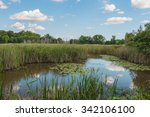 Scenic Of Swamps In National...