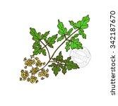 hand drawn decorative parsley ... | Shutterstock .eps vector #342187670