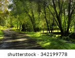autumn scene with road. road in ... | Shutterstock . vector #342199778