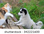 Stock photo the cat hit the dog paw 342221600