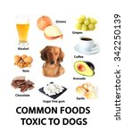 chart of common foods toxic to...