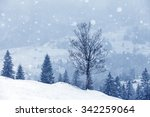 the foggy forest in winter ... | Shutterstock . vector #342259064