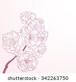 cherry flowers in line art style | Shutterstock .eps vector #342263750