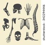 human skeleton. vector black... | Shutterstock .eps vector #342294446