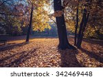colorful autumn park on sunny... | Shutterstock . vector #342469448
