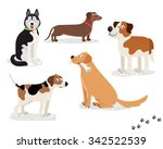 Stock vector happy dog vector characters on white background dogs standing and sitting holding newspaper 342522539