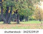 Park Landscape Lonely Tree