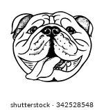 bulldog face  vector... | Shutterstock .eps vector #342528548